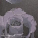 Eco Rose 2771