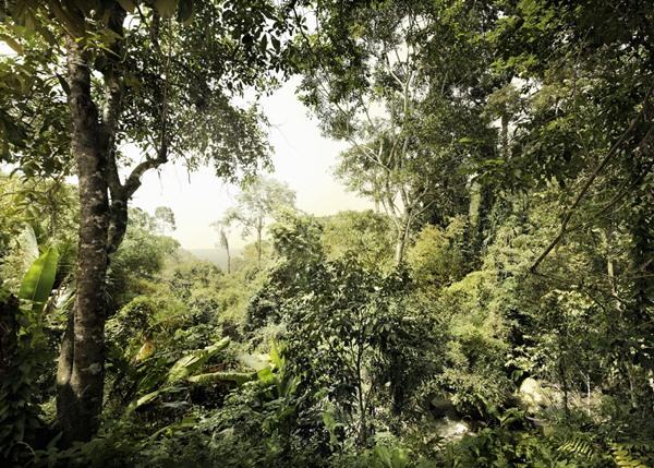 V7-751 Dschungel