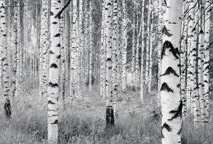 V8-724 Woods