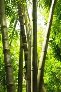Fotomural Cañas Bambu FNA005