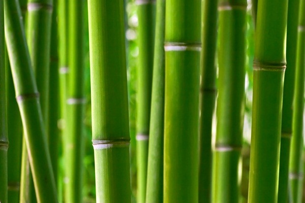 Fotomural Bambú FNA003