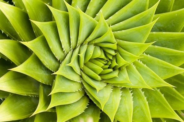 Fotomural hojas Cactus FNA009