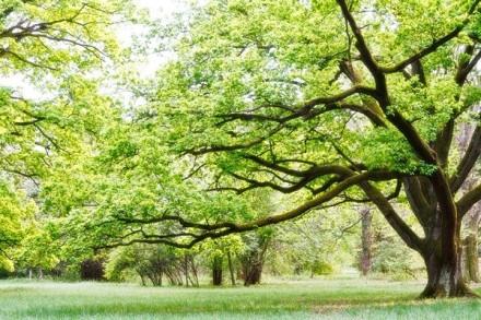 Fotomural Parque Verde FNA006