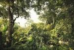 XXL4-024 Dschungel