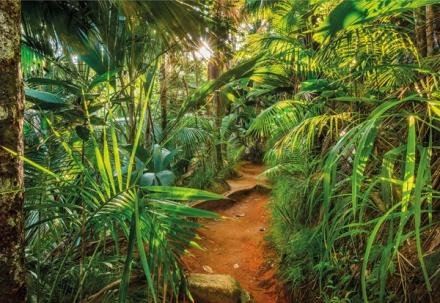 8-989 Jungle trail