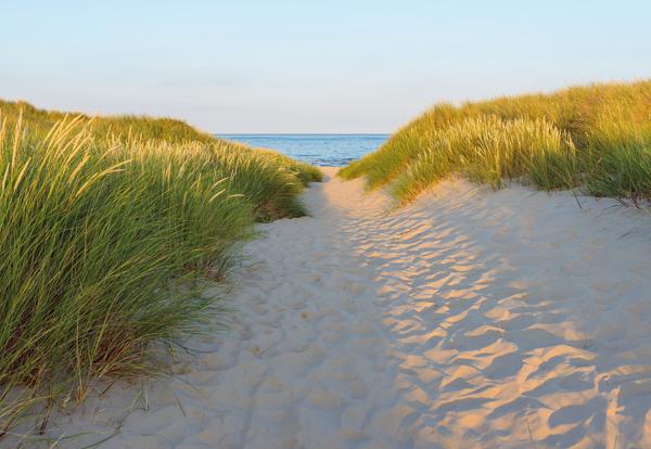 8-995 sandy path